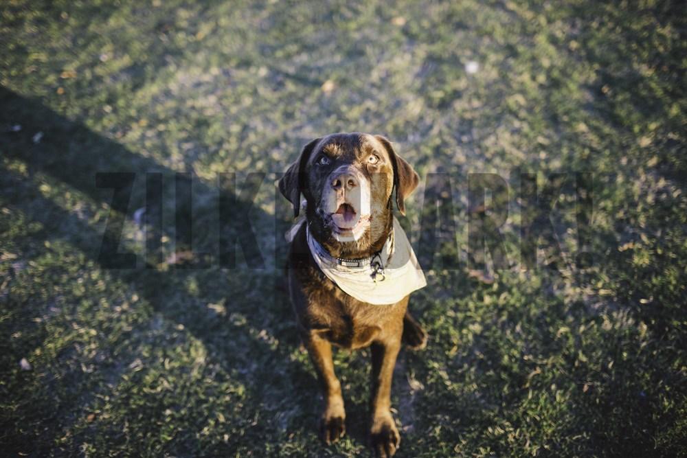 11.18 zilker dogs_-23.jpg
