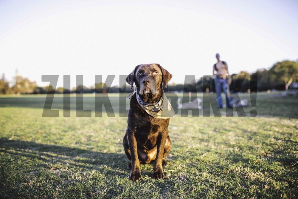 11.18 zilker dogs_-24.jpg