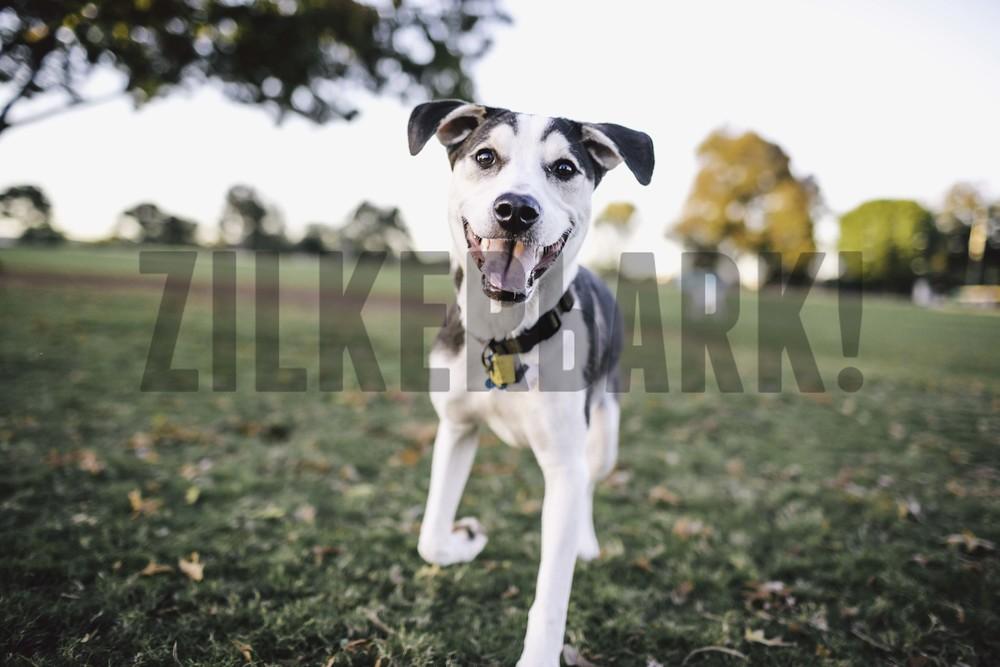 11.18 zilker dogs_-26.jpg