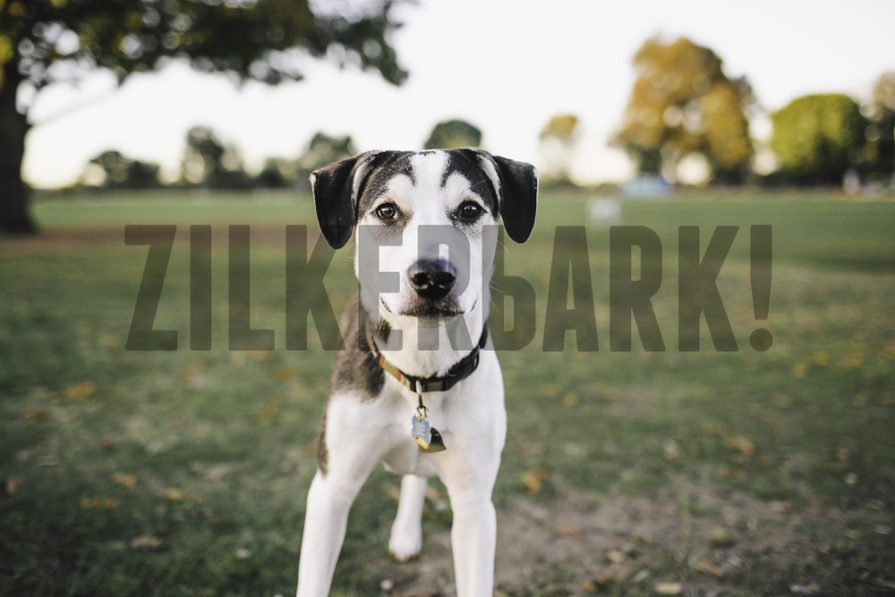 11.18 zilker dogs_-27.jpg