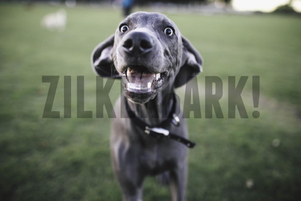 11.18 zilker dogs_-29.jpg