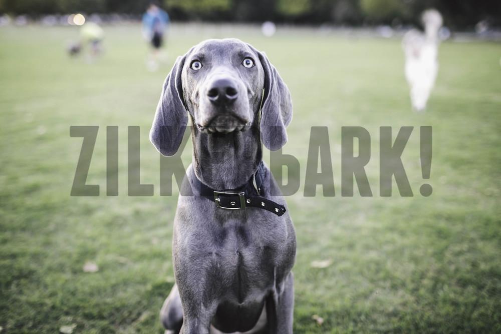 11.18 zilker dogs_-30.jpg