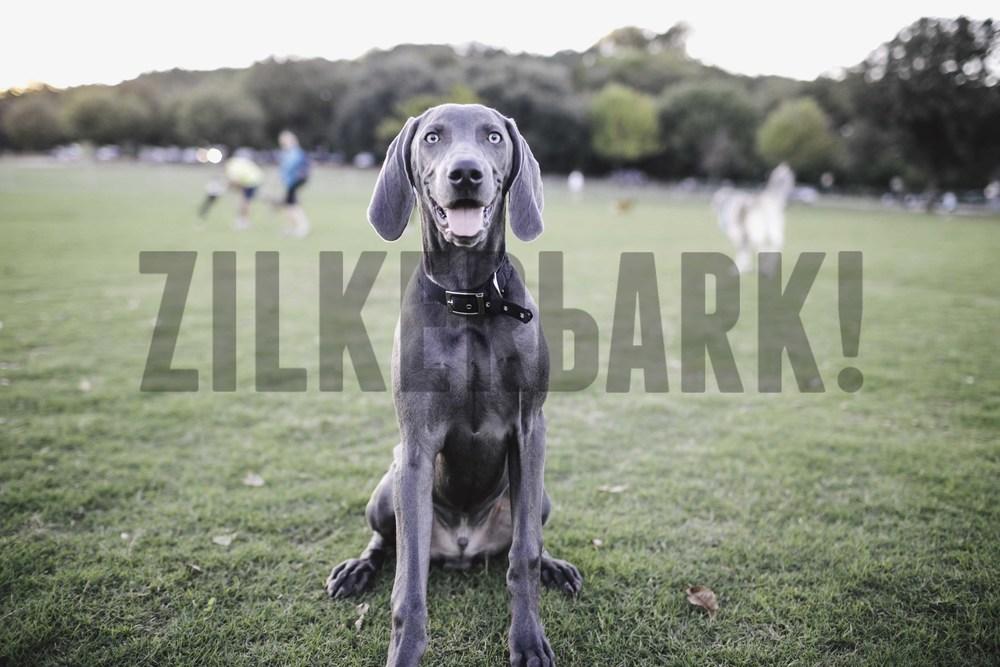 11.18 zilker dogs_-31.jpg