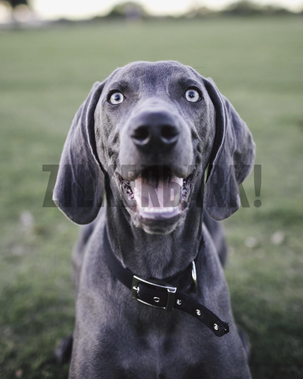 11.18 zilker dogs_-32.jpg