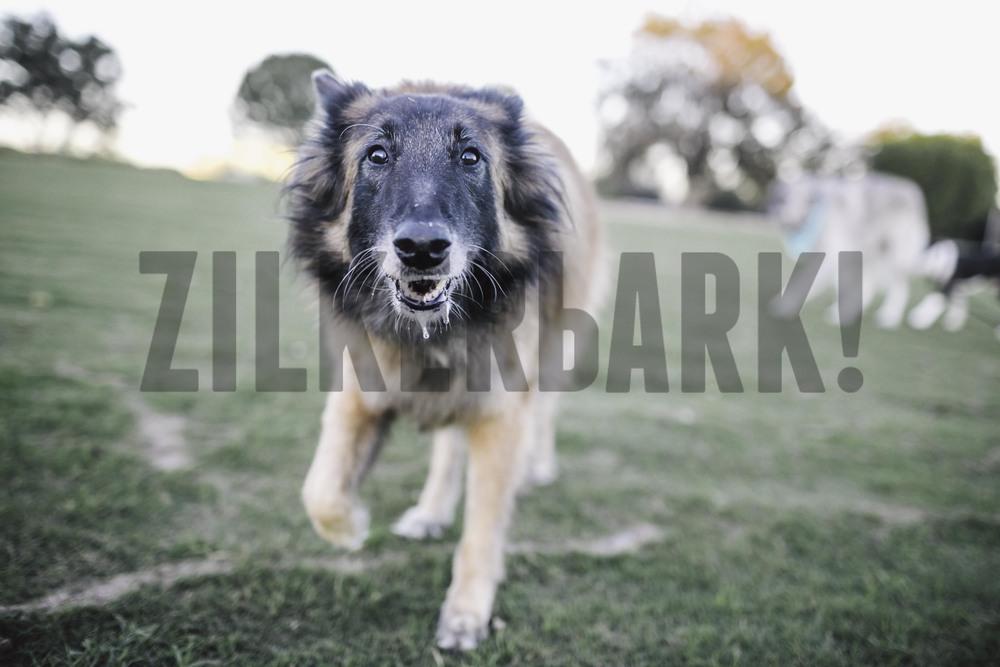 11.18 zilker dogs_-34.jpg