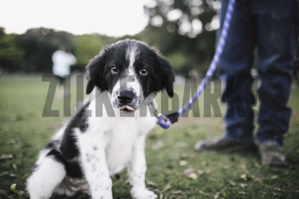 11.18 zilker dogs_-40.jpg