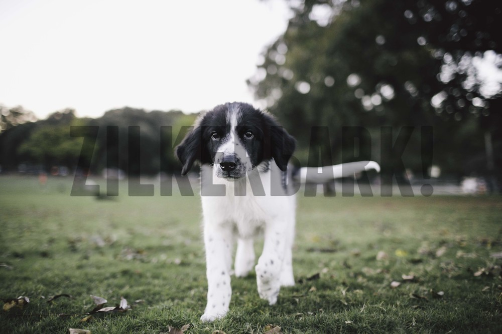 11.18 zilker dogs_-42.jpg