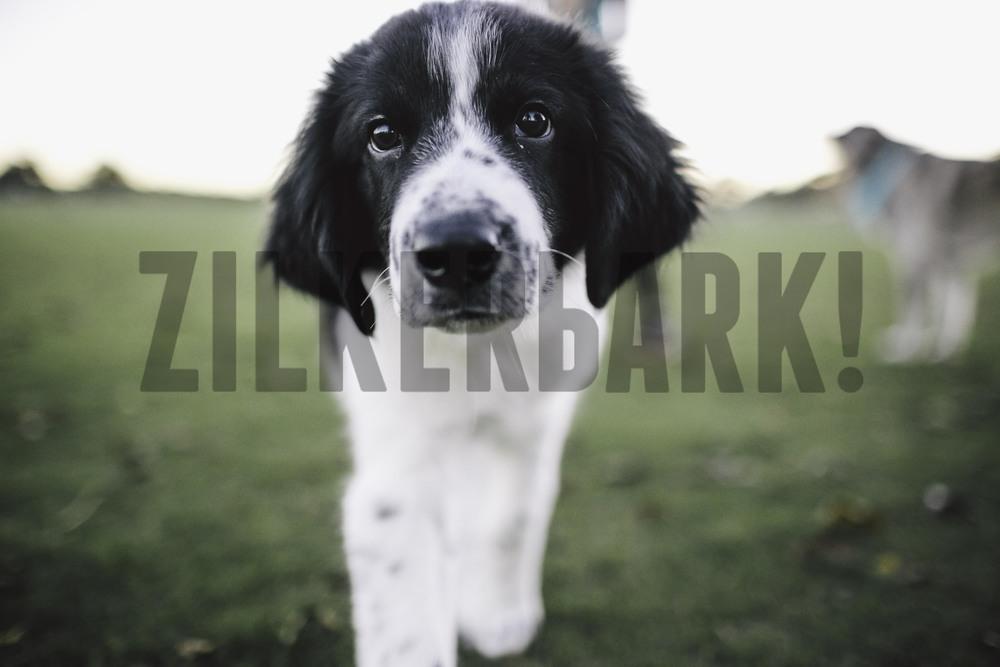 11.18 zilker dogs_-43.jpg
