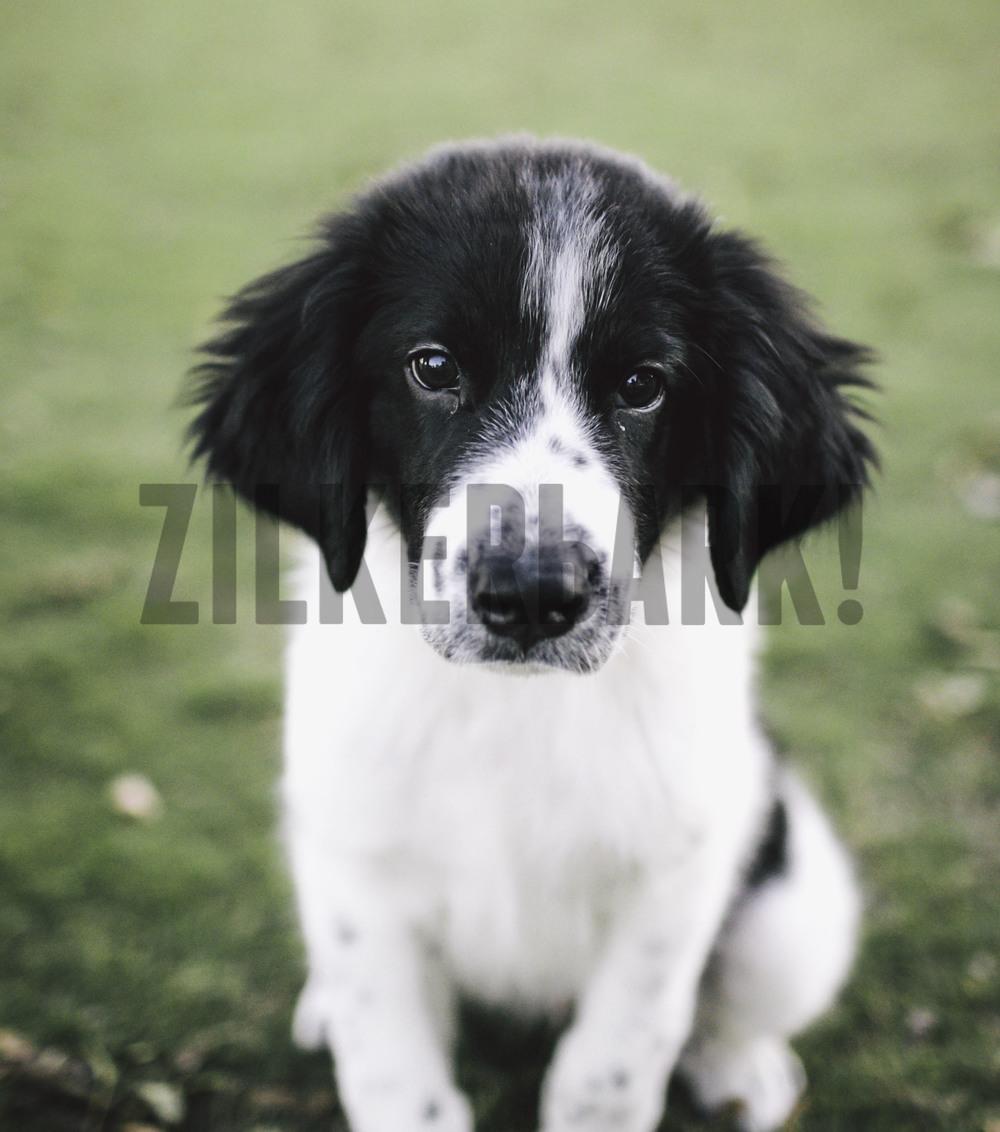 11.18 zilker dogs_-44.jpg