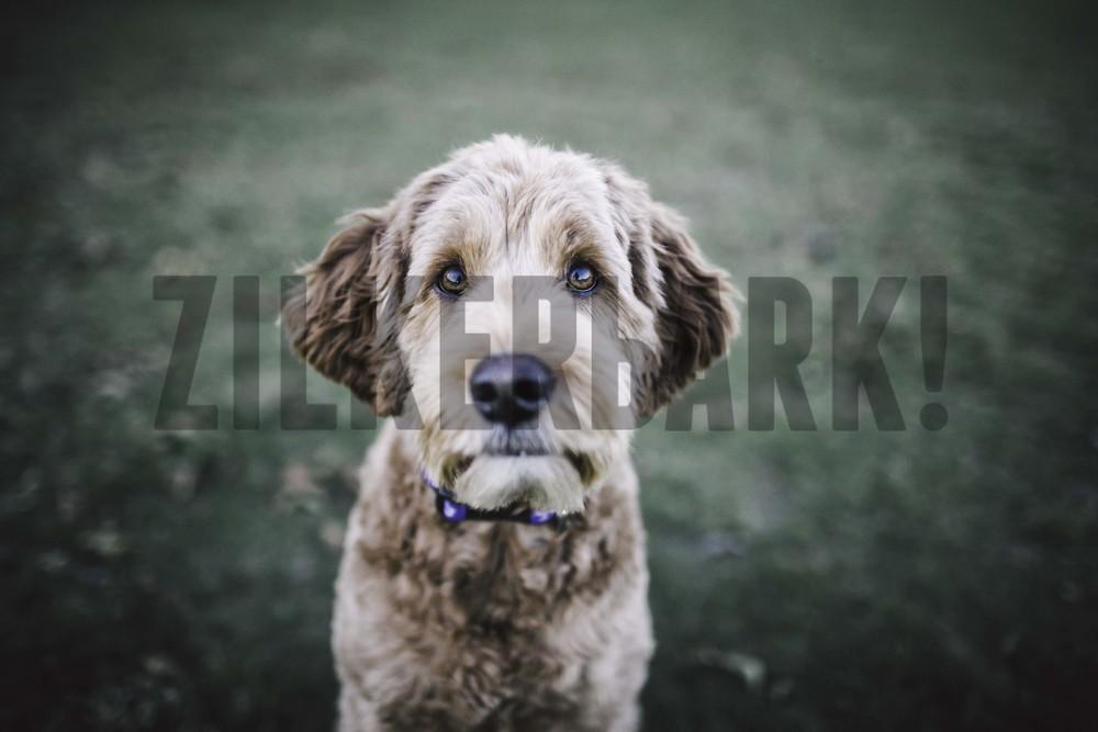 11.18 zilker dogs_-46.jpg