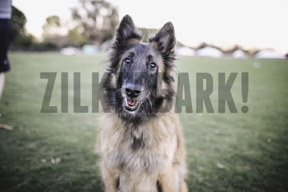 11.18 zilker dogs_-48.jpg