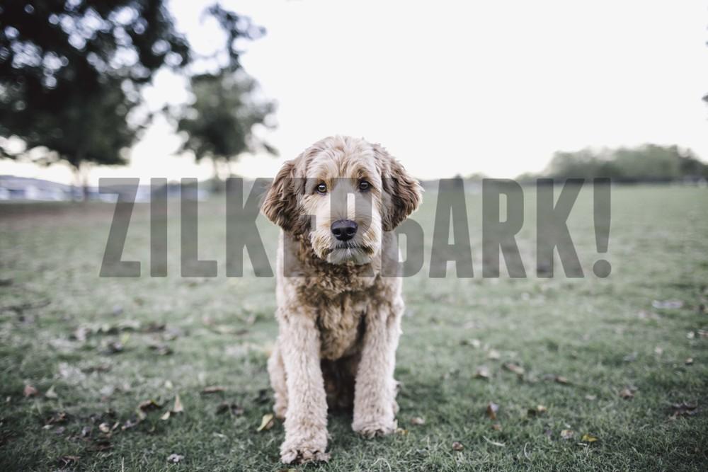 11.18 zilker dogs_-47.jpg
