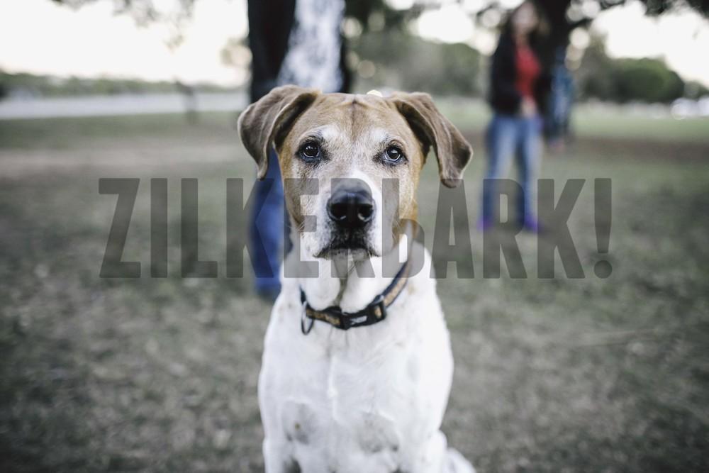 11.18 zilker dogs_-50.jpg