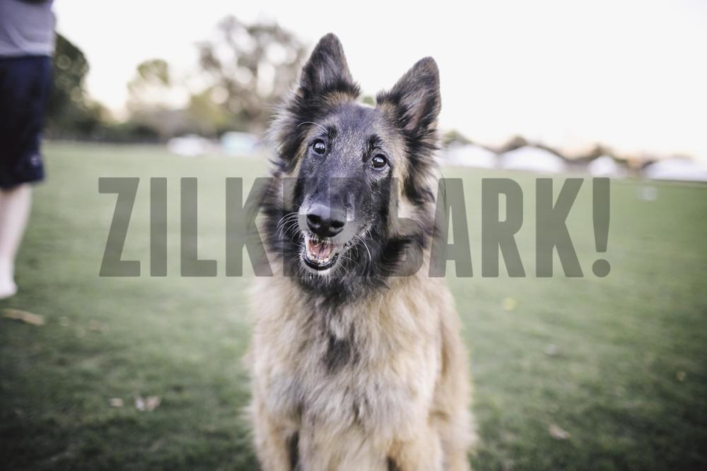 11.18 zilker dogs_-49.jpg