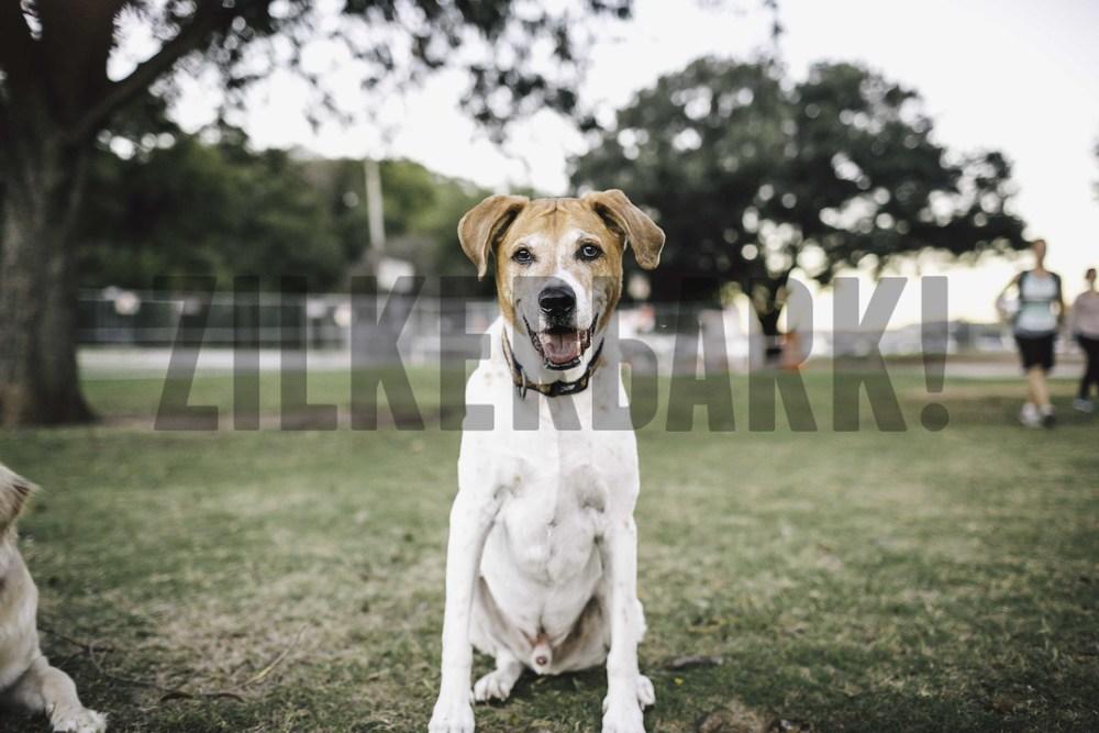 11.18 zilker dogs_-51.jpg