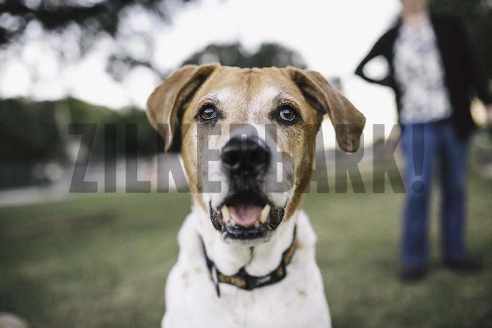 11.18 zilker dogs_-52.jpg