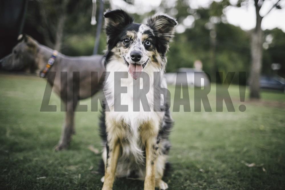11.18 zilker dogs_-55.jpg