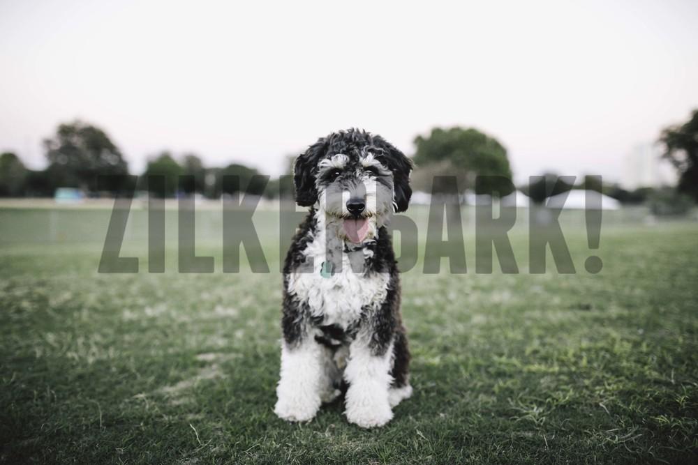 11.18 zilker dogs_-58.jpg