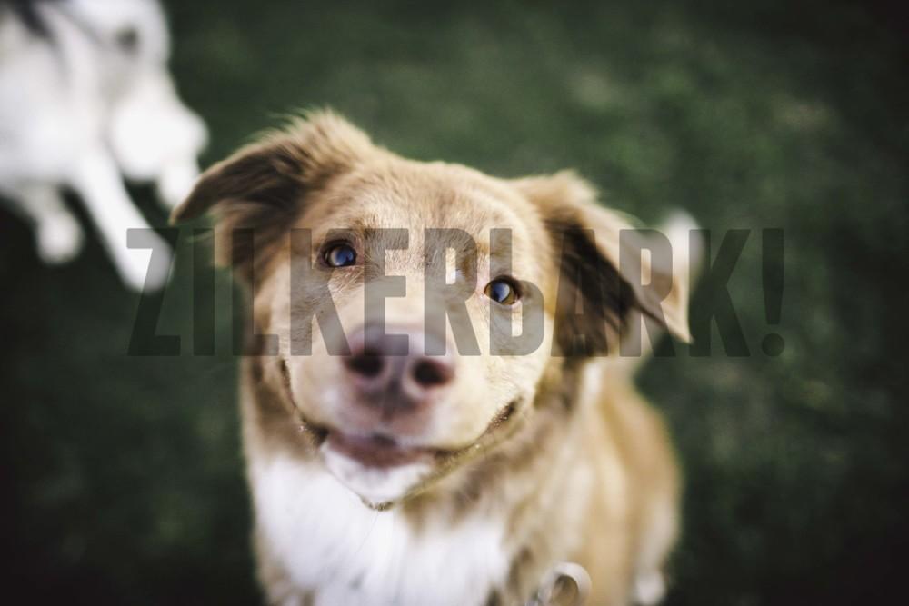 11.18 zilker dogs_-61.jpg