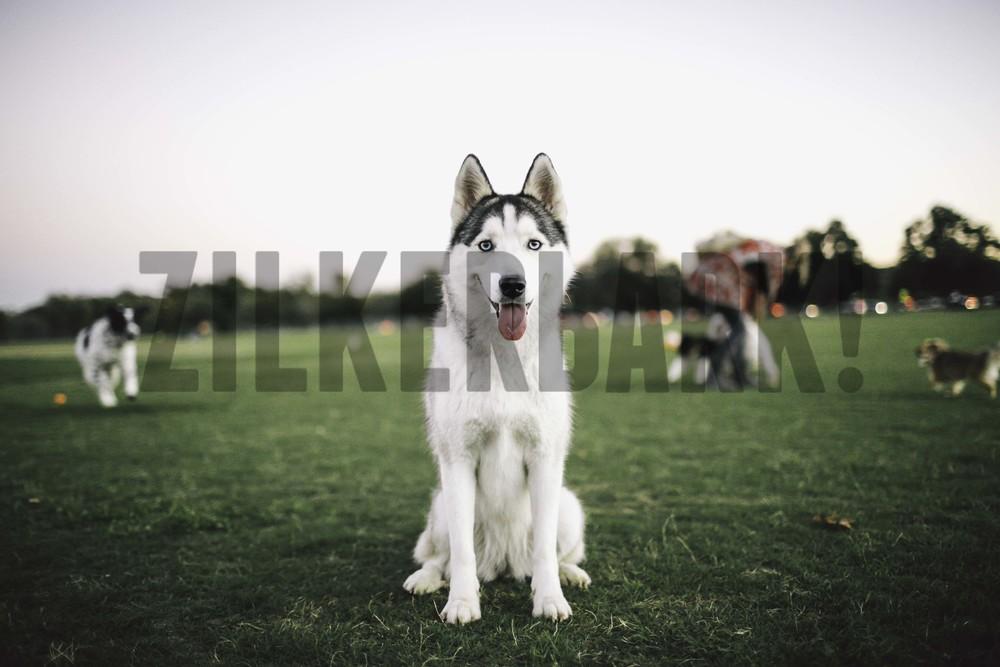11.18 zilker dogs_-63.jpg