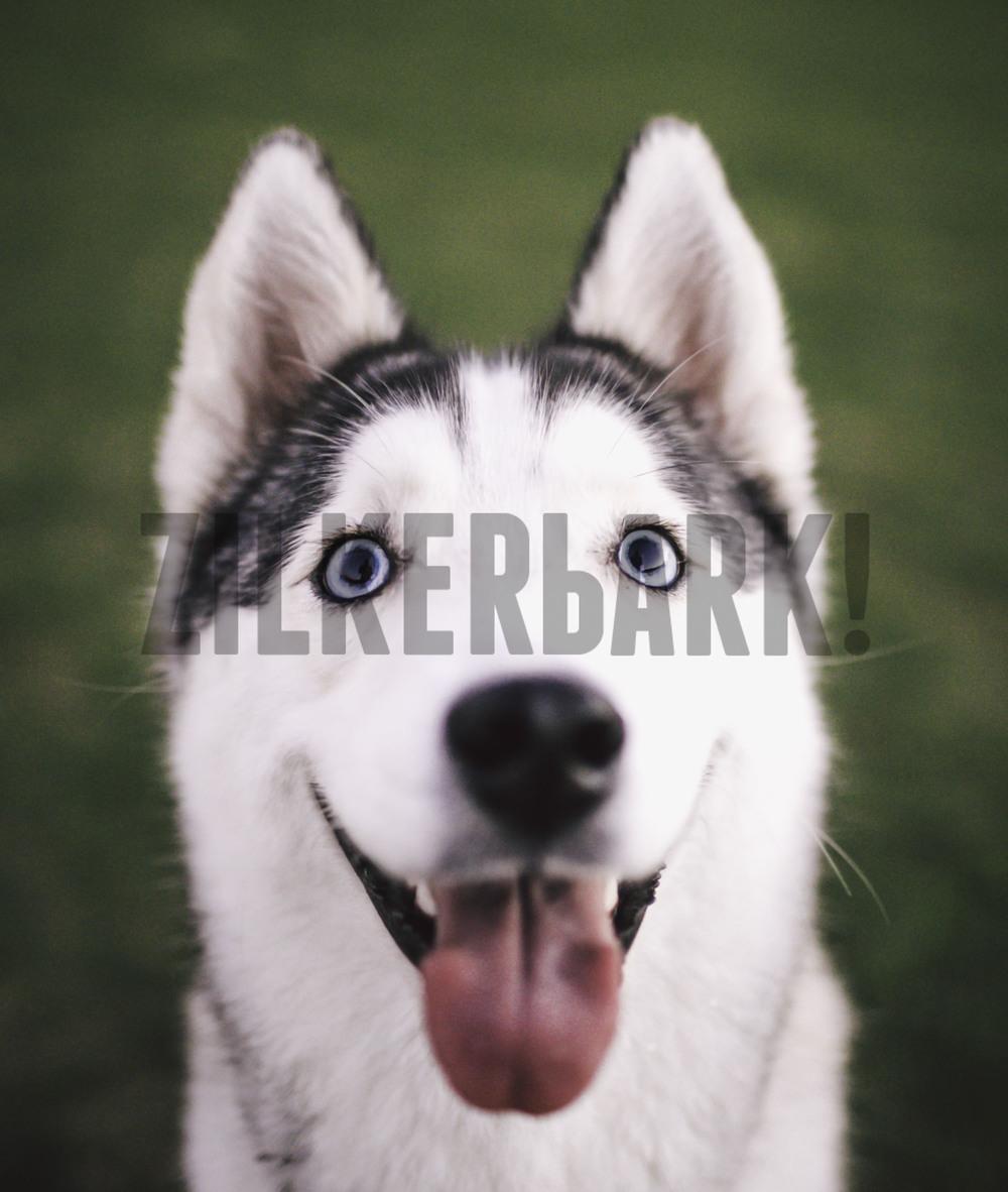 11.18 zilker dogs_-62.jpg