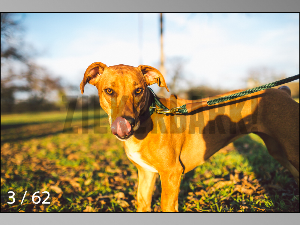 Ridgebacks Web Preview-03.jpg