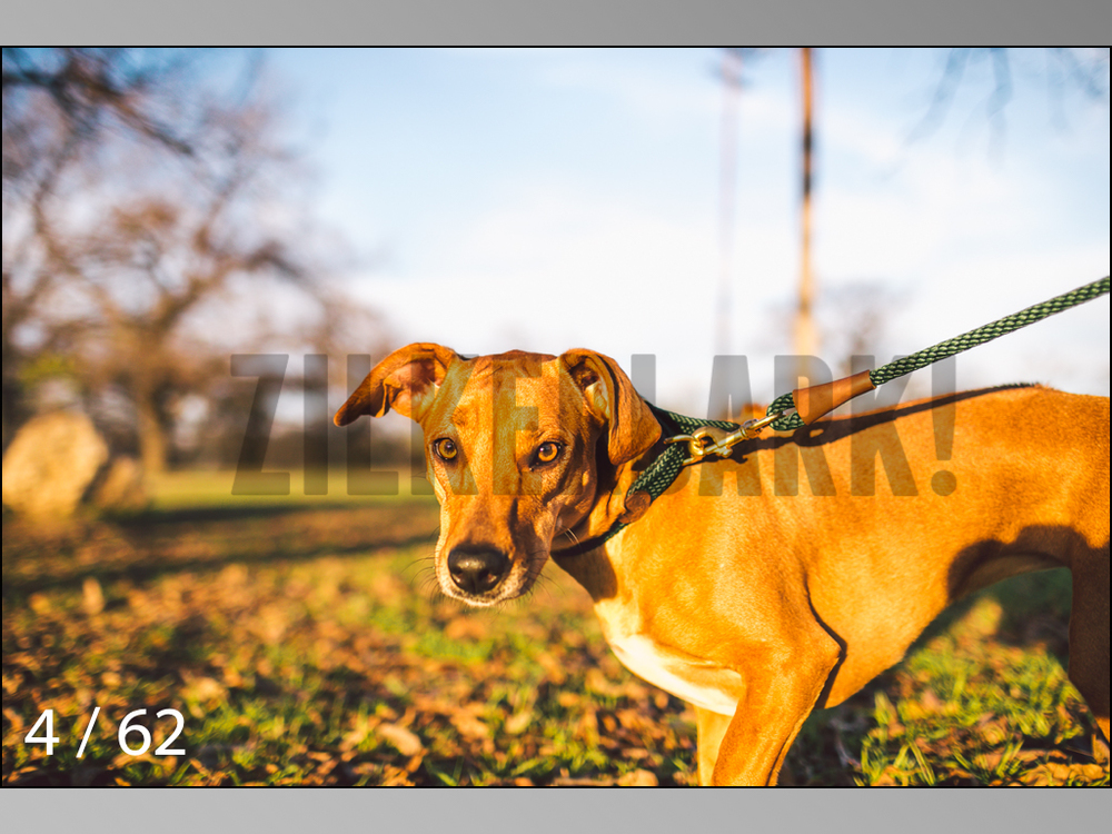 Ridgebacks Web Preview-04.jpg