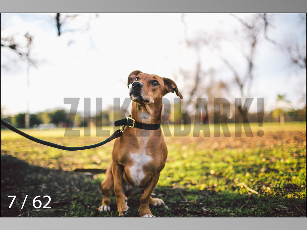 Ridgebacks Web Preview-07.jpg