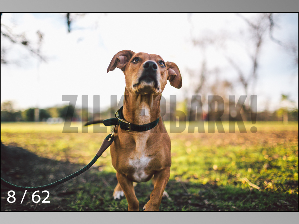 Ridgebacks Web Preview-08.jpg
