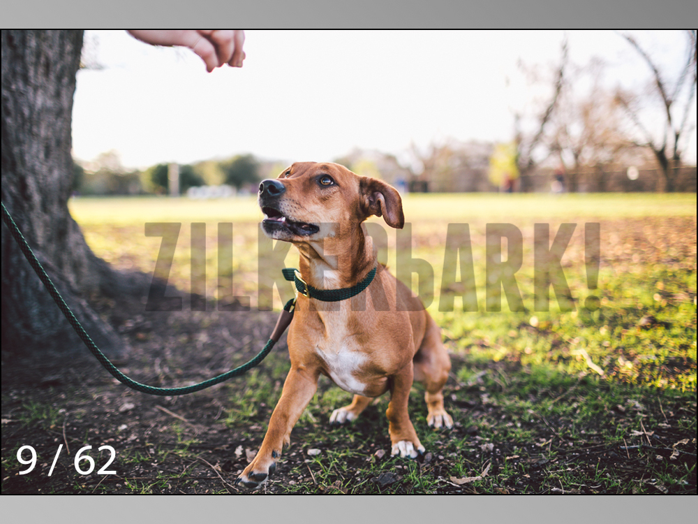 Ridgebacks Web Preview-09.jpg