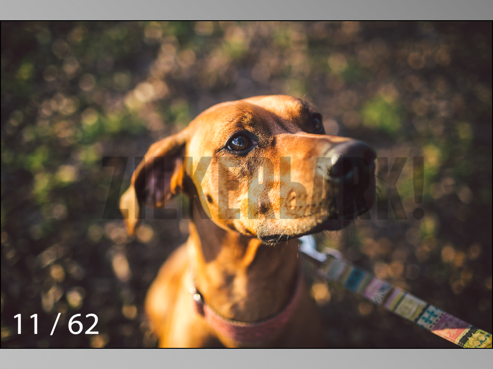 Ridgebacks Web Preview-11.jpg