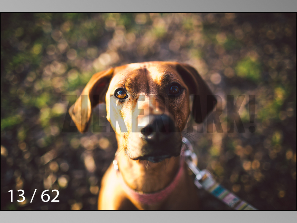 Ridgebacks Web Preview-13.jpg