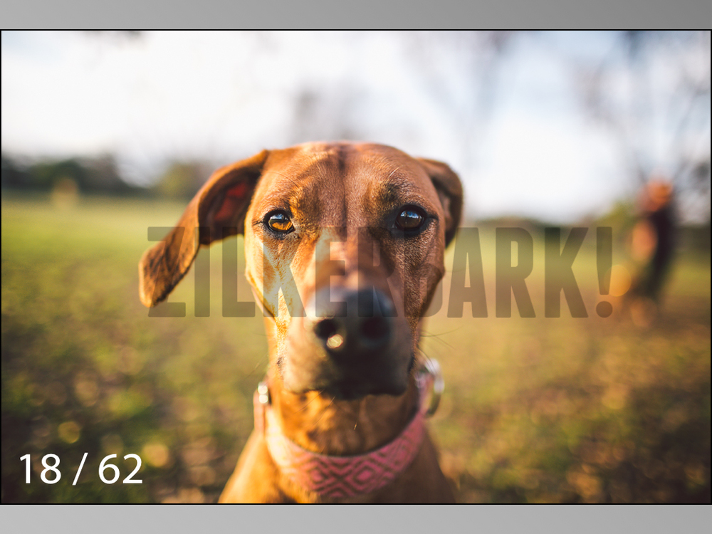 Ridgebacks Web Preview-18.jpg