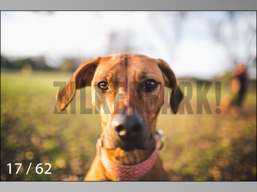 Ridgebacks Web Preview-17.jpg