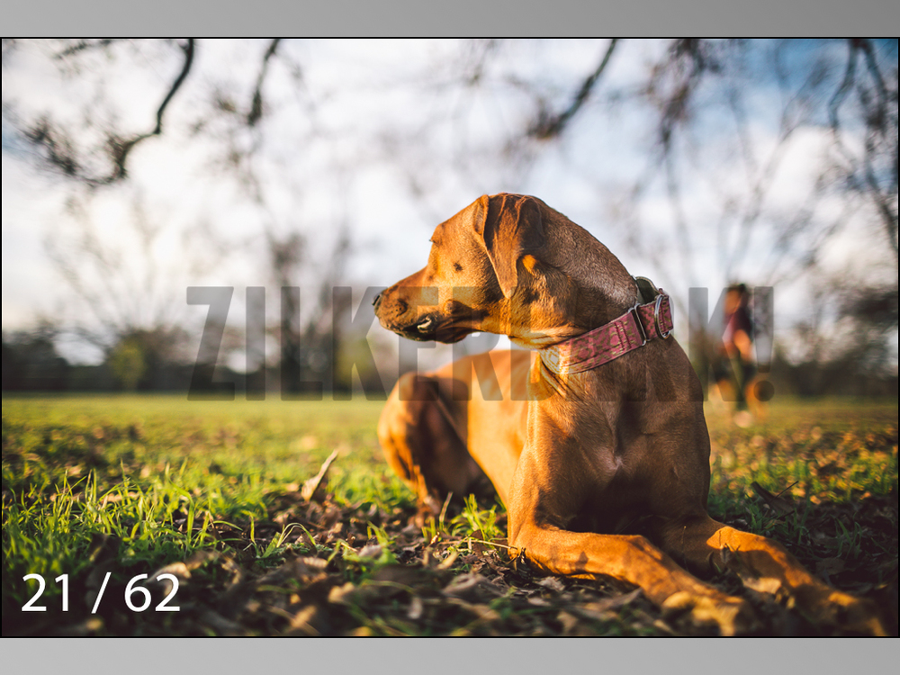 Ridgebacks Web Preview-21.jpg
