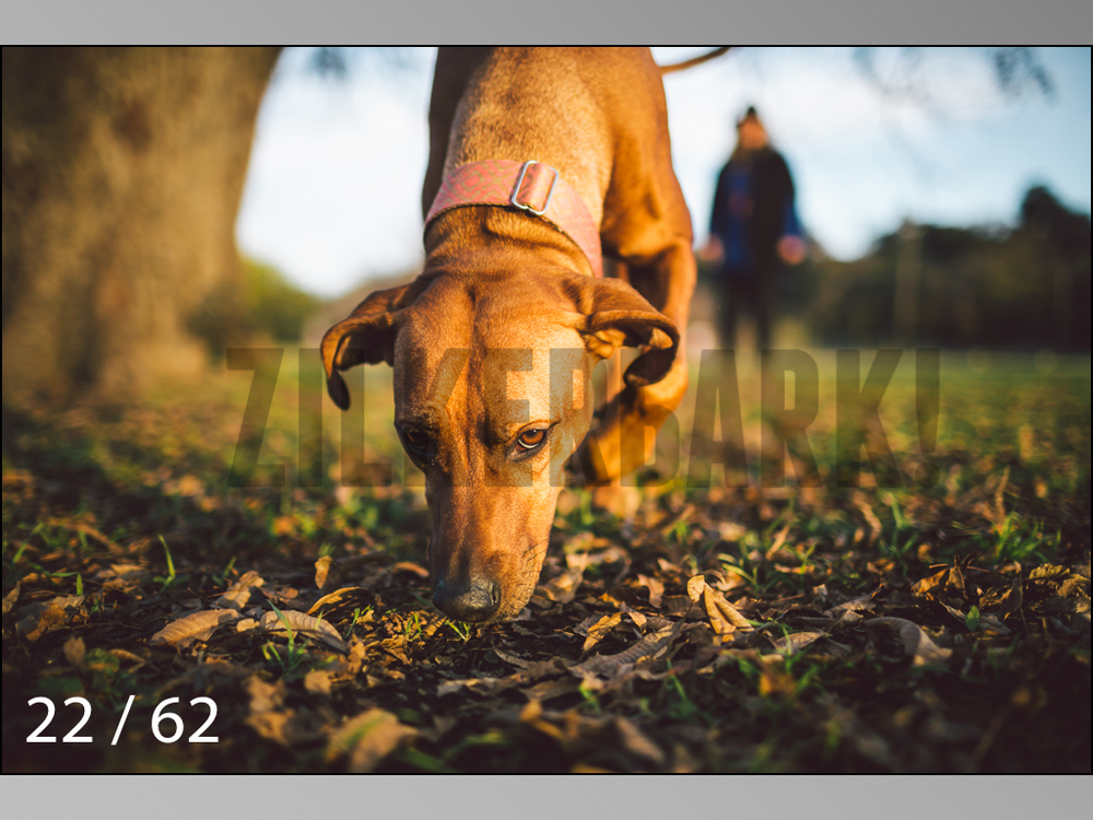 Ridgebacks Web Preview-22.jpg