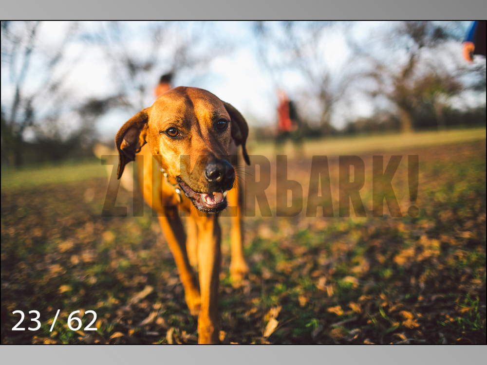 Ridgebacks Web Preview-23.jpg