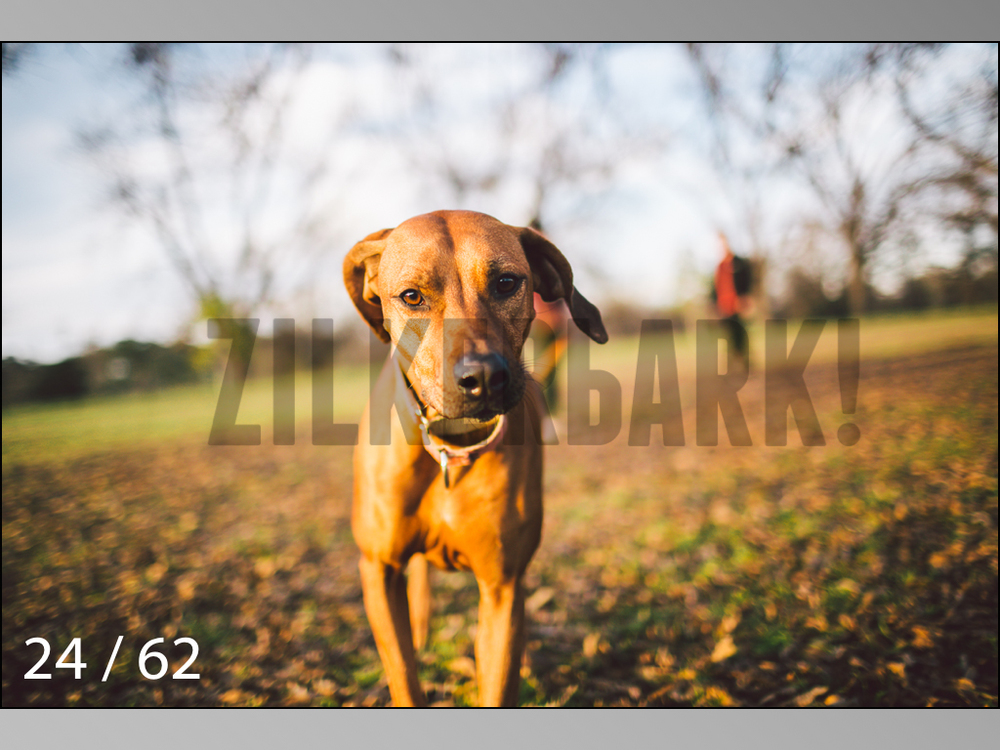 Ridgebacks Web Preview-24.jpg