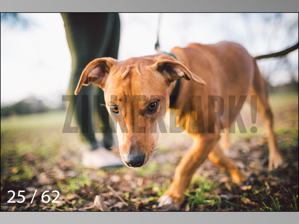 Ridgebacks Web Preview-25.jpg