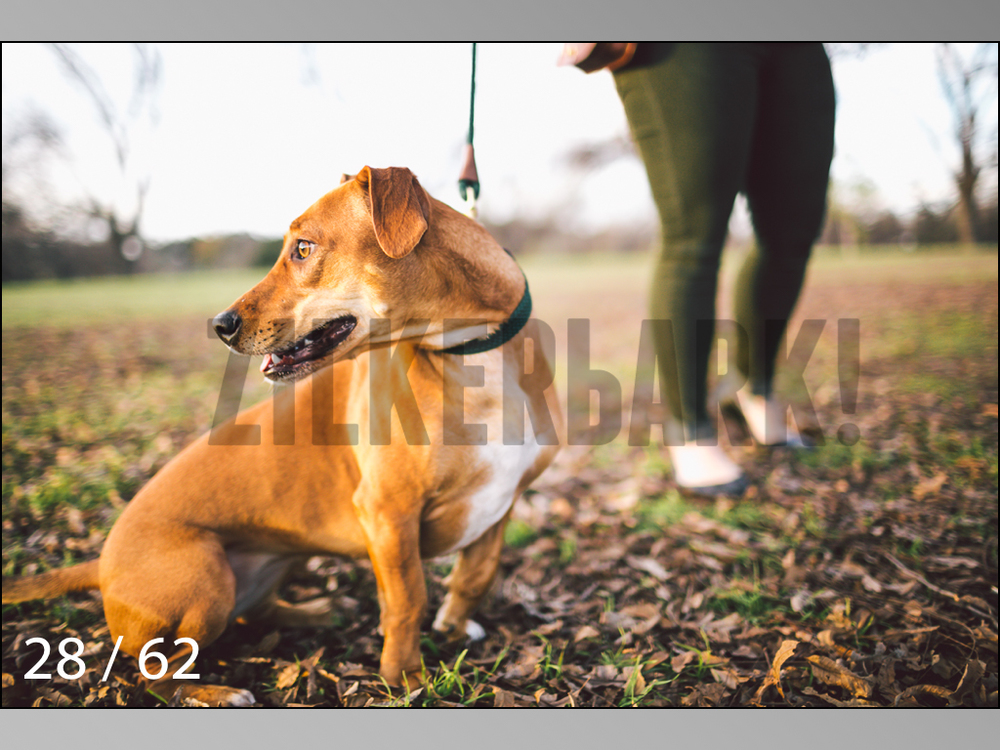 Ridgebacks Web Preview-28.jpg