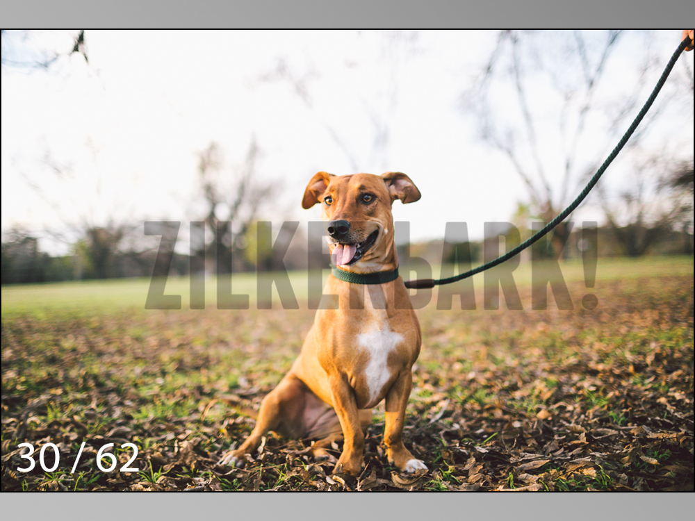 Ridgebacks Web Preview-30.jpg