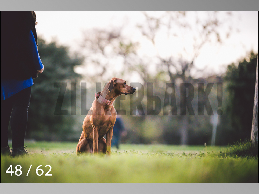 Ridgebacks Web Preview-48.jpg