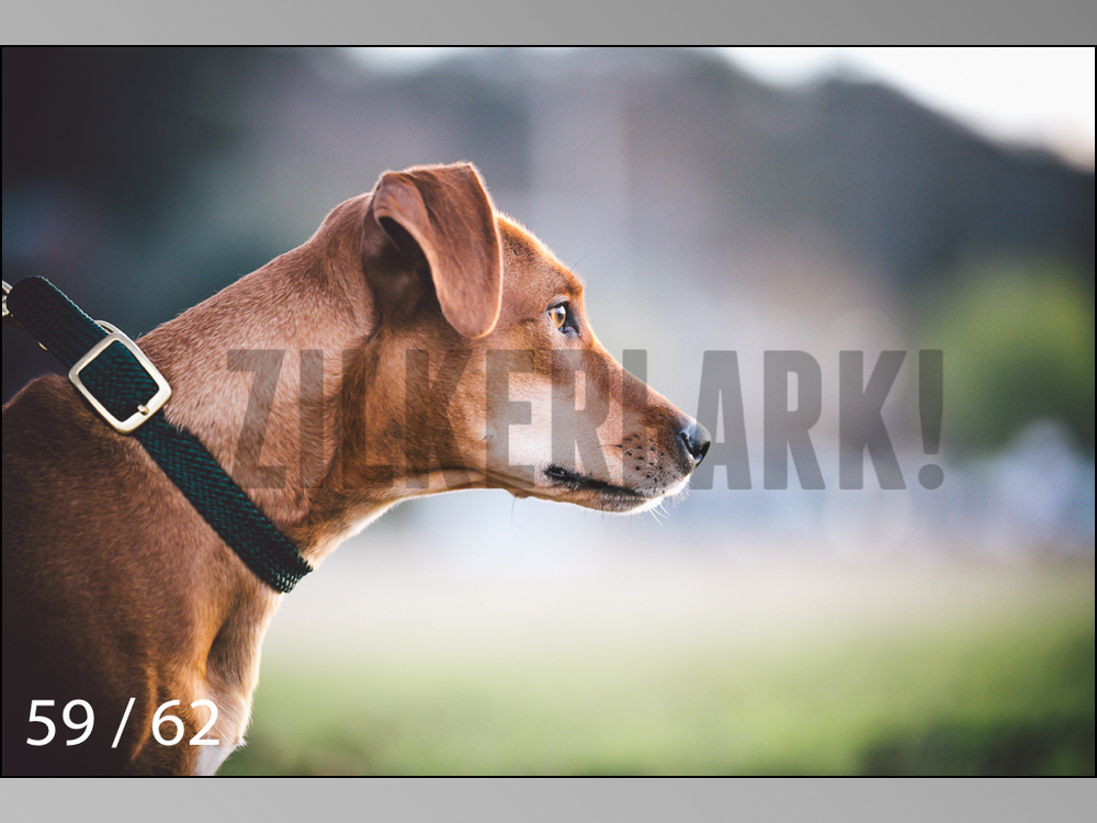 Ridgebacks Web Preview-59.jpg