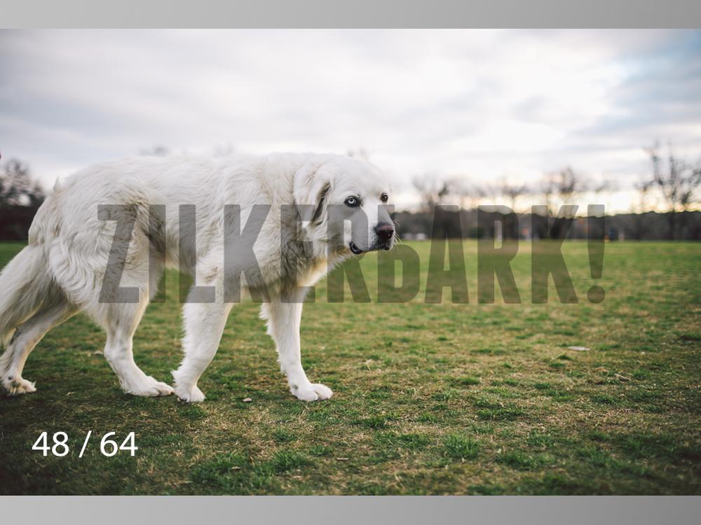 Moose-48.jpg