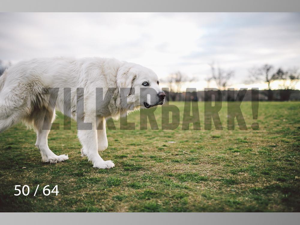 Moose-50.jpg
