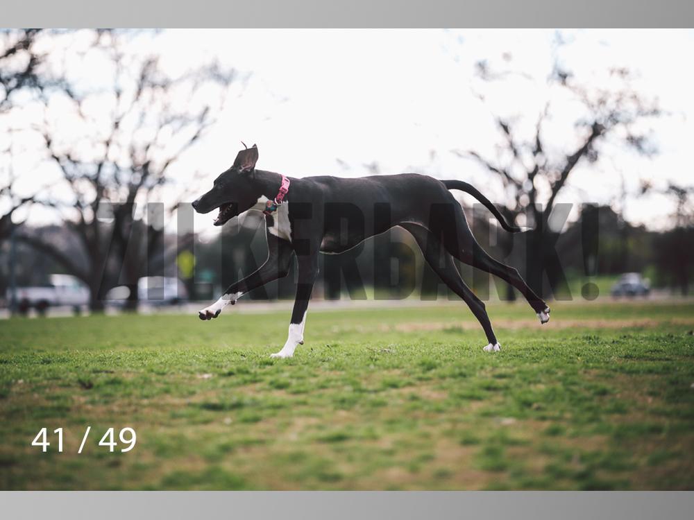 Scarlett-41.jpg
