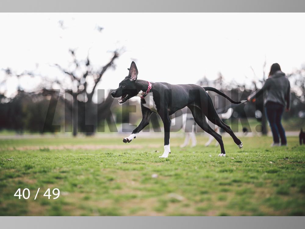 Scarlett-40.jpg