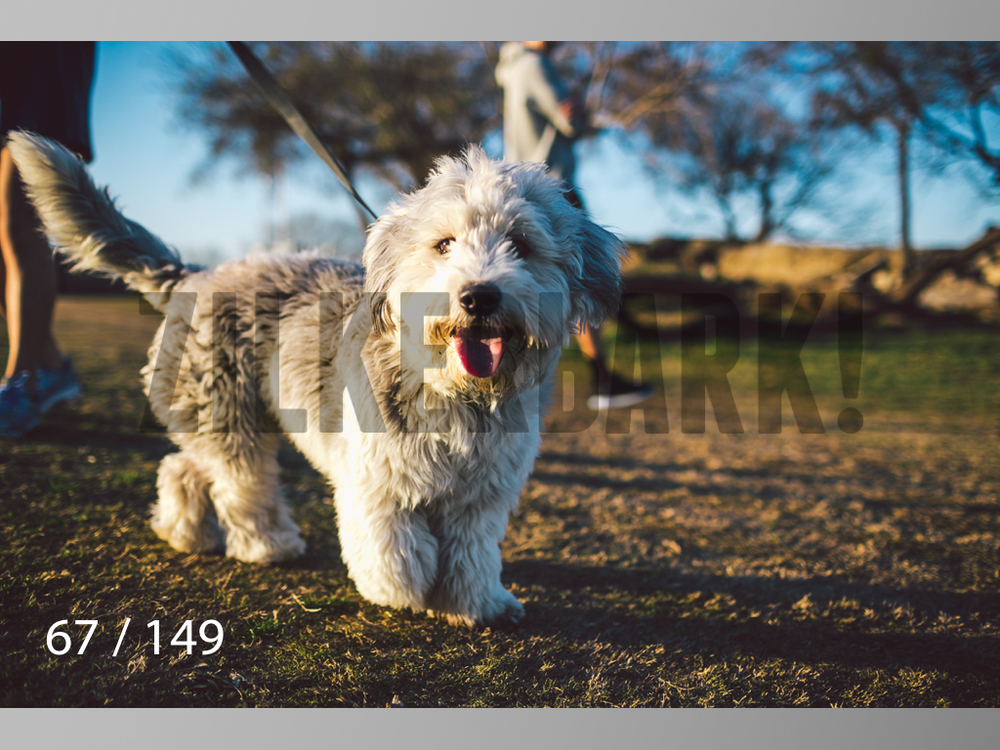 January Web All Dogs 2-067.jpg