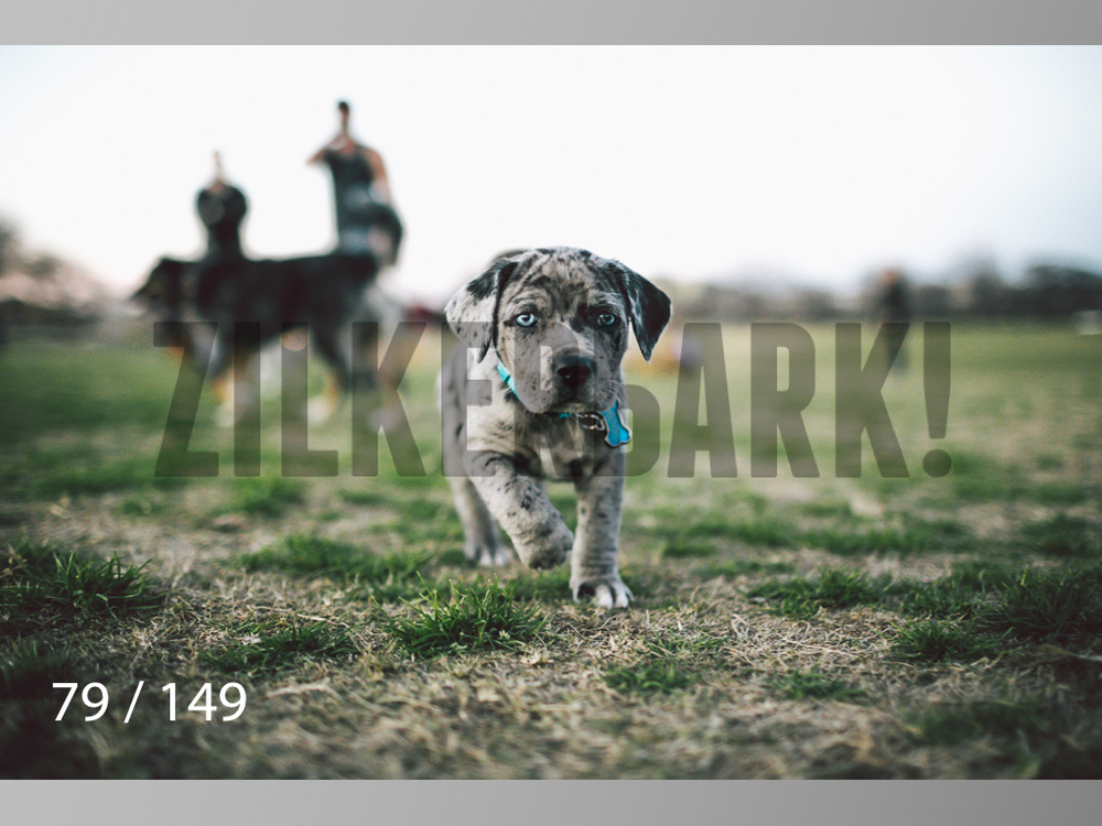 January Web All Dogs 2-079.jpg