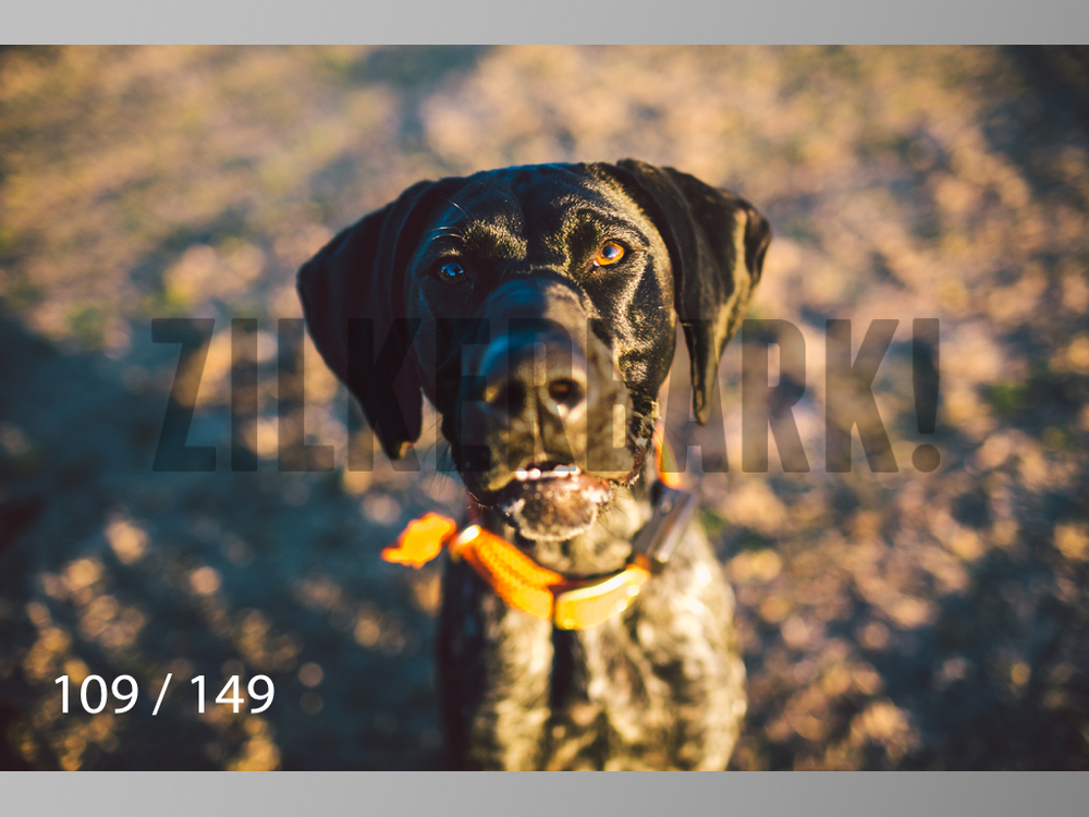January Web All Dogs 2-109.jpg